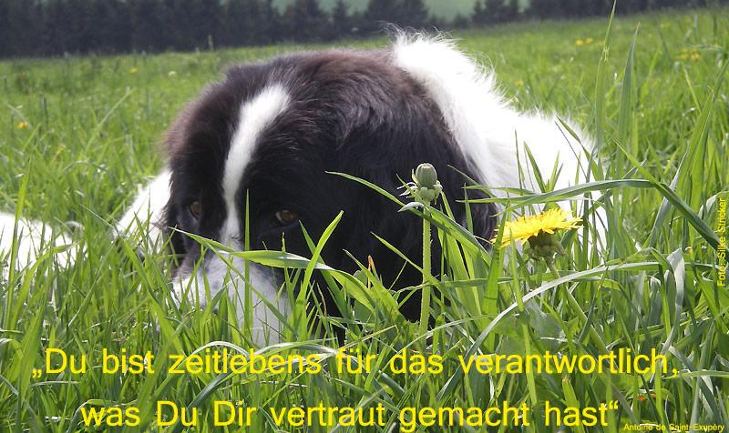 Monchen-im-Gras