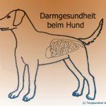 Darmgesundheit beim Hund – Ein paar Worte zur Darmflora