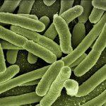 Darmgesundheit – Darmbakterien